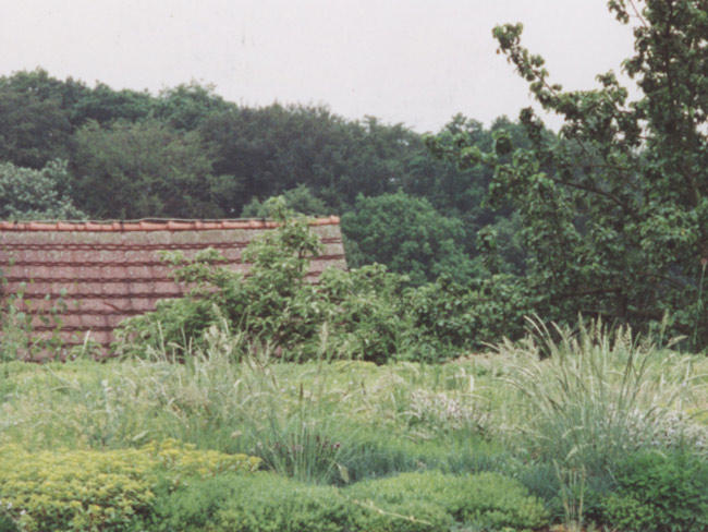 Wohnhaus in Bürgel  Gründach und Dachklempnerarbeiten